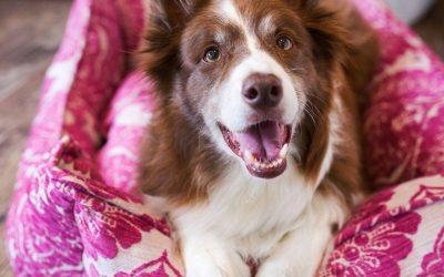 Es läßt sich schön wohnen – auch mit Hund