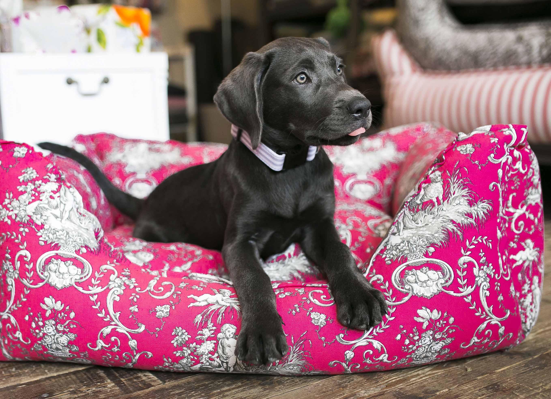 es l t sich sch n wohnen auch mit hund paulis hundeausstatter. Black Bedroom Furniture Sets. Home Design Ideas
